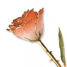 Natural Orange and White Rose
