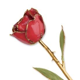 Ruby Sun Rose