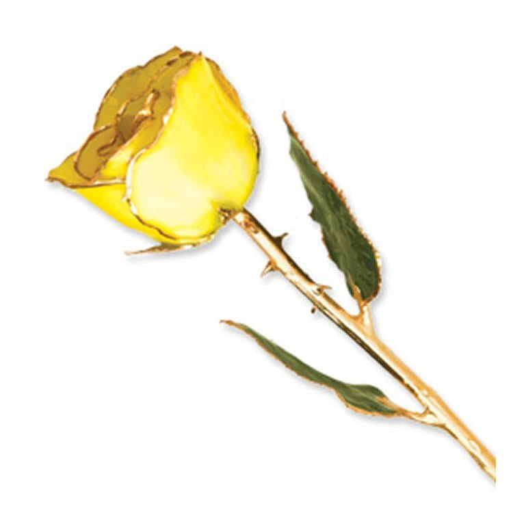 Natural Yellow Rose