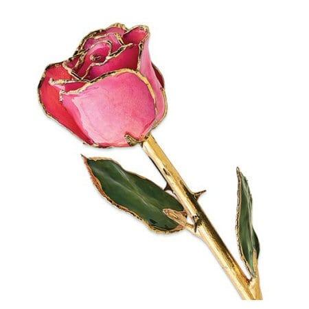 Fucshia Rose