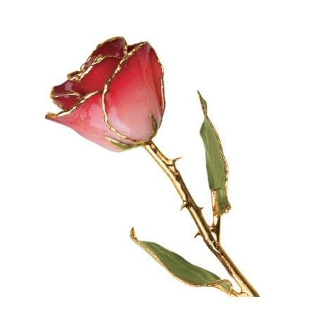 Pink & Burgundy Rose